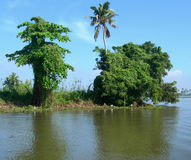 Tourism in India, lush vegetation in Kerala Stock Images