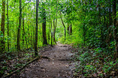Tourism trail in the woods in Phu Hin Rong Kla National Park, Ph Stock Photos