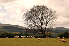 Tourism Wales: Beautiful scenery in rural Wales Stock Photos