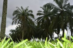 Tourism. Went sight seeing with a friend in calabar, Nigeria Stock Images