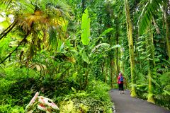 Tourist admiring lush tropical vegetation of the Hawaii Tropical Botanical Garden of Big Island of Hawaii Stock Photo