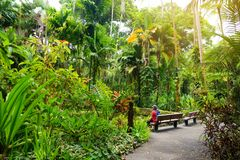 Tourist admiring lush tropical vegetation of the Hawaii Tropical Botanical Garden of Big Island of Hawaii. USA Stock Photography
