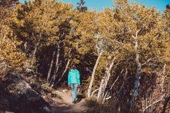 Tourist in aspen grove at autumn. Woman tourist walking on trail in aspen grove at autumn in Rocky Mountain National Park. Colorado, USA Royalty Free Stock Photos
