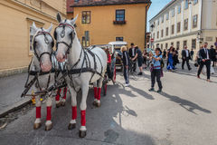 Tourist attraction dual horse carriage Stock Image