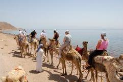 Tourist auf Kamelen Stockbild
