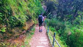 Tourist in the hike. Tourist with backpack in the hike walks on path among the forest in Himalayas stock video footage