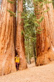 Tourist with backpack hiking in Sequoia National Park Stock Photography