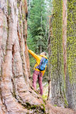 Tourist with backpack hiking in Sequoia National Park Royalty Free Stock Photo