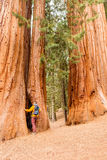 Tourist with backpack hiking in Sequoia National Park Stock Image
