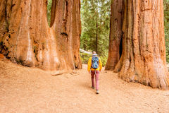 Tourist with backpack hiking in Sequoia National Park Royalty Free Stock Images