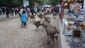 Tourist be greeted by the deer from nearby Nara Park on approach to Todaiji Stock Images