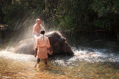 Tourist being sprayed by an elephant Stock Image