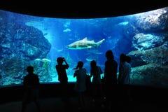 Tourist in big aquarium, Bangkok, Thailand. Stock Image
