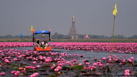 Tourist boat travel for see pink lotus Royalty Free Stock Photo