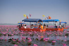Tourist boat travel for see pink lotus royalty free stock photography