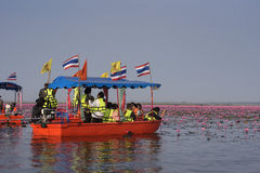 Tourist boat travel for see pink lotus stock images