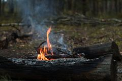 Tourist bonfire in autumn forest royalty free stock photography