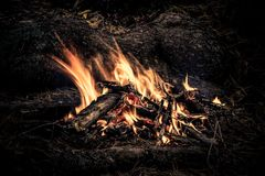 Tourist bonfire in the wild forest. A flame of fire in a dark forest stock images