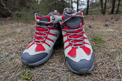 Tourist boot in forest Royalty Free Stock Image