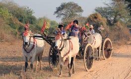 Tourist bullock cart Royalty Free Stock Photos