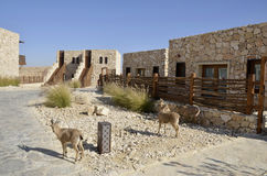 Tourist cabins in Negev desert, Israel. Stock Image