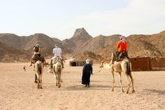 Tourist on camel Royalty Free Stock Images