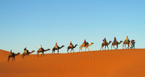 Tourist camel caravan in Sahara desert royalty free stock photography
