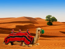 Tourist camel on sand Royalty Free Stock Photo