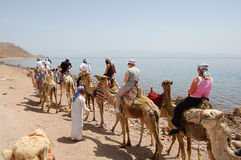 Tourist on camels Stock Image