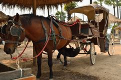 Tourist carriage of brown horse. In a farm Stock Image