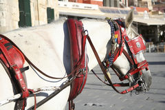 Tourist carriage horse Royalty Free Stock Image