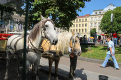 Tourist carriage waiting for passengers on the streets Royalty Free Stock Images