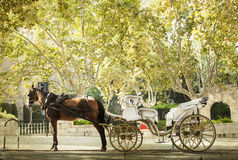 Tourist chariot in Palma de Mallorca Stock Images