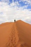 Tourist climbing a dune in the Sossusvlei desert, Namibia. A tourist climbing a dune in the Sossusvlei desert, Namibia royalty free stock image