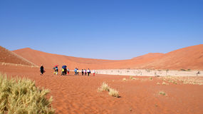 Tourist at dead vlei in Namibia Stock Image