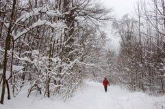 Tourist, der alleine in Winterwald geht Lizenzfreies Stockfoto