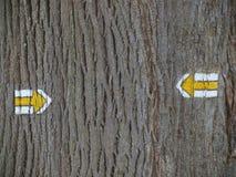 Tourist, der auf der Barke eines Baums Wegweiser ist Stockbild