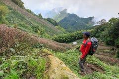 Tourist, der die Ooolong-Teeplantagen im Berg von Nantou, Taiwan aufpasst Lizenzfreie Stockfotografie