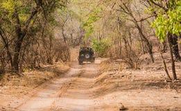 Tourist in der Safari stockfotografie