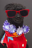 Tourist Dog Royalty Free Stock Image
