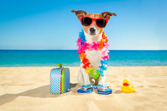 Tourist dog at the beach royalty free stock images