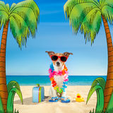 Tourist dog at the beach royalty free stock image
