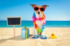 Tourist dog at the beach stock photos