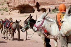 Tourist and Donkeys amongst the sandstone desert landscape of Petra, Jordan Stock Images