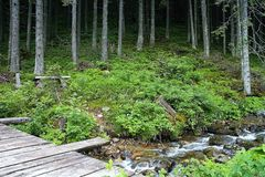 Tourist educational trail to Tri vody in Demanovska valley with a bridge over a mountain stream and one of several benches. Beautiful Slovakia, forest, green stock image