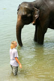 Tourist and elephant Stock Photos