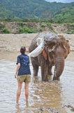 Tourist with an elephant Stock Photography