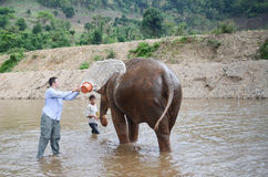 Tourist with an elephant Stock Images