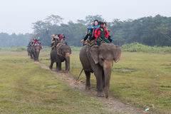 Tourist on an elephant safari in Chitwan National Park, Nepal Royalty Free Stock Images