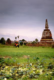 Tourist on elephant sightseeing in Ayutthaya Historical Park, Ay Royalty Free Stock Images